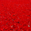 A field of poppies — Stock Photo