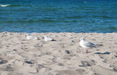 Seagulls beach — Stock Photo
