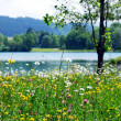 Spring meadow — Stock Photo #2518854
