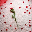 Stock Photo: Beautyful backgroung with red rose