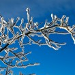 Snow-covered branch — Stock Photo #1619140