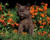 Милый котенок на открытом воздухе — Стоковое фото
