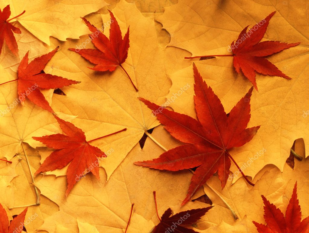 Bright colorful autumn leaves  Stock Photo #1782249