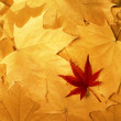 Bright colorful autumn leaves - Stock Photo