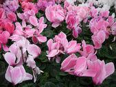Flowers background — Zdjęcie stockowe