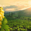Green Grapes on vineyard background — Foto Stock