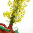 Biodiesel — Stock Photo