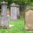 Jewish cemetery — Stock Photo #1647930