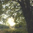 Stock Photo: Sun and trees