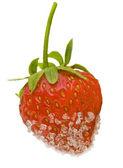 Strawberries in sugar — Stock Photo
