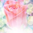 Delicate rose with blurred lights — Stock Photo