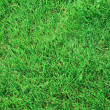 Grass texture — Stock Photo #1654320