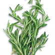 Twigs of fresh rosemary - Stock Photo