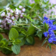 Fresh herbs from garden - Stock Photo
