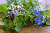 Fresh herbs from garden — Stock Photo