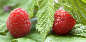 Fresh raspberry with leaves — Stock Photo