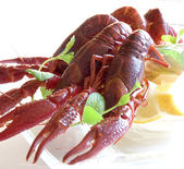 Boiled crayfish on table — Stock Photo