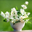 Jasmine flowers - Stock Photo