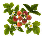Strawberry motive — Stock Photo