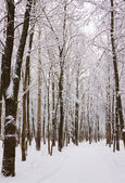 Path in forest in wintertime — Stock Photo