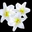 White flowers — Stock Photo #1694870