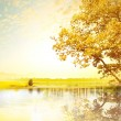 Yellow tree - Foto Stock