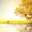 Yellow tree - Foto de Stock  