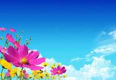 Flield bloemen — Stockfoto