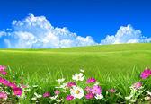 летний день — Стоковое фото