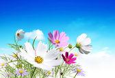 цветы 1 — Стоковое фото