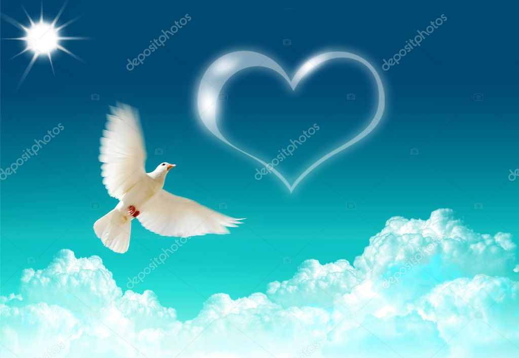 Loved dove flying in the blue shining sky  Stock Photo #1694025
