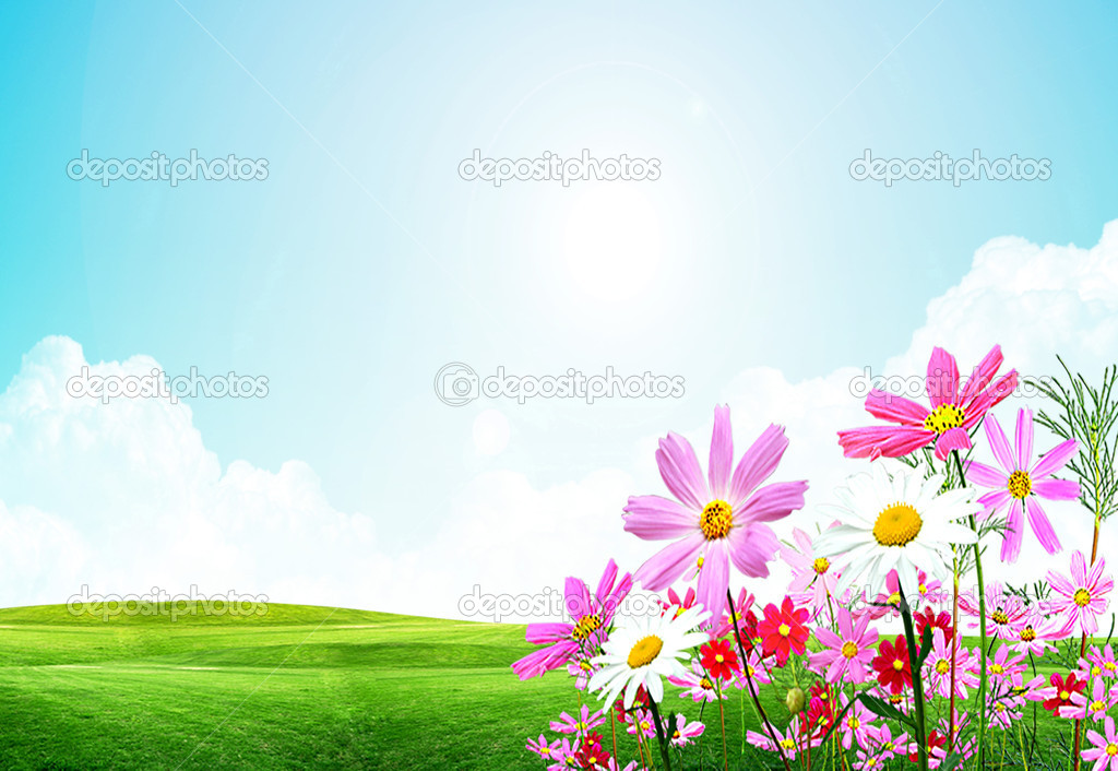 Nice image with field flowers on the shining sky background — Stock Photo #1695325
