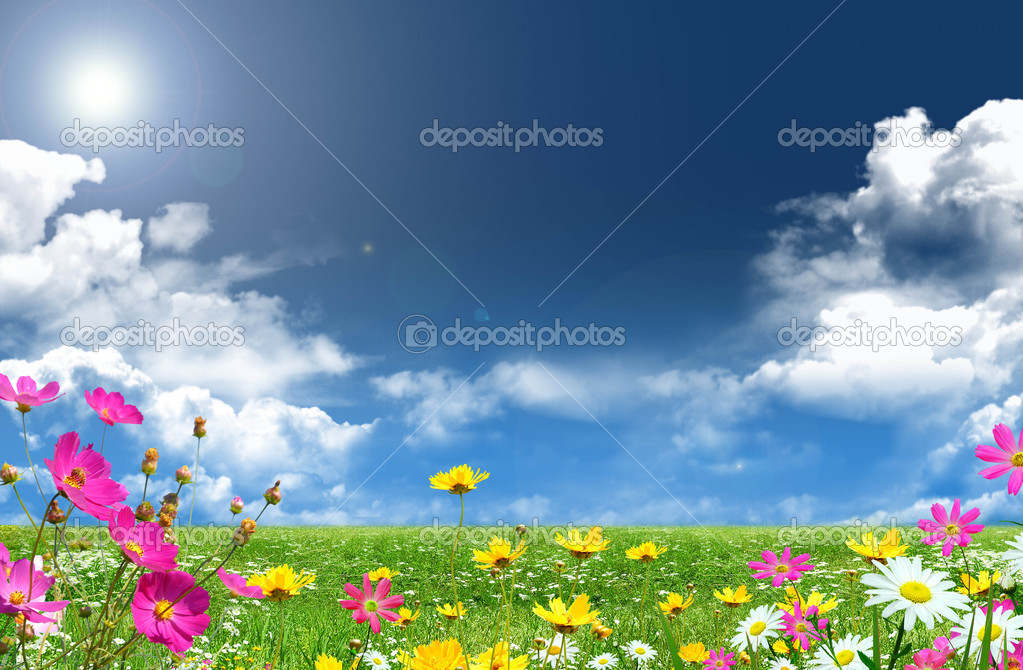 Shining summer day with fresh color flowers — Stock Photo #1695539