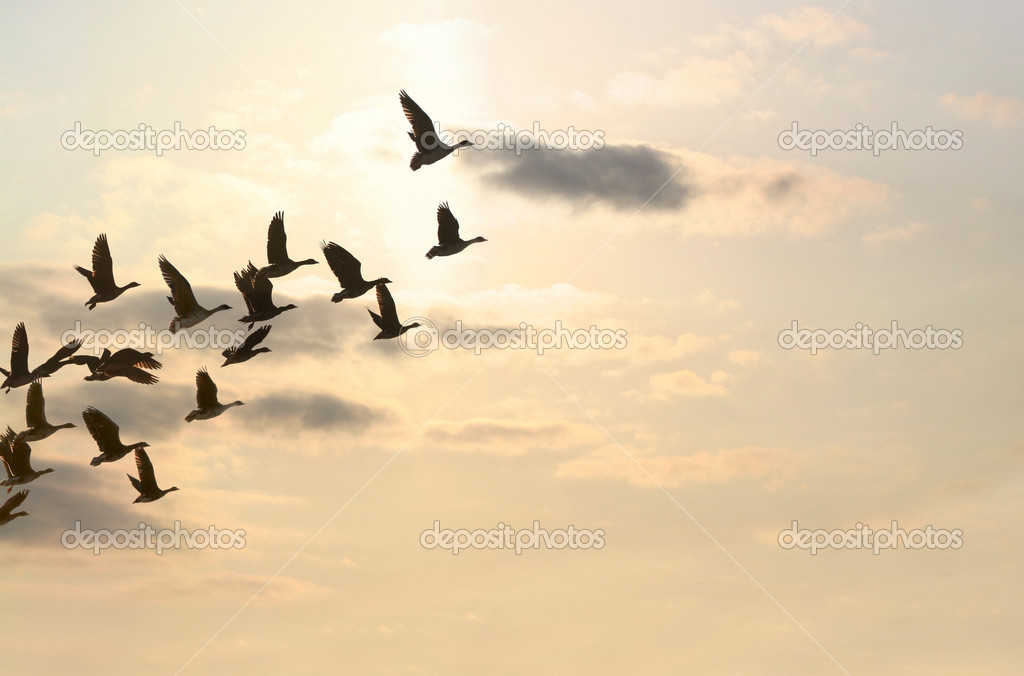 In autumn nearly all the birds are departing to warm places — Stock Photo #1696046