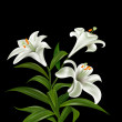 Foto Stock: White flowers