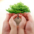 Hands and a tree — Stock Photo