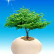 Stock Photo: Tree in egg