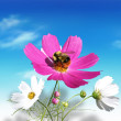 Flowers and a bee — Stock Photo
