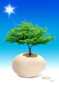 Tree in the egg — Stock Photo