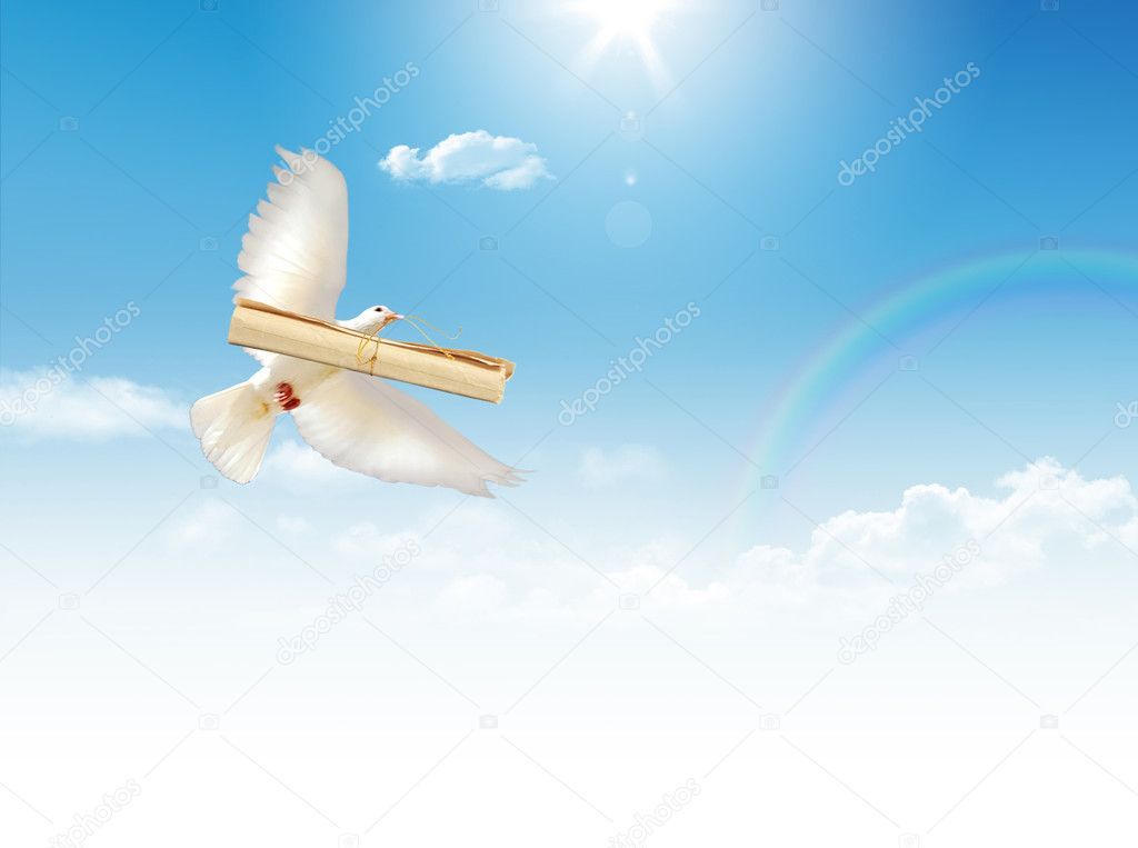 A free flying white dove with a letter isolated on a blue sky background. — Stock Photo #1709995