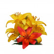 Stock Photo: Yellow and red flowers