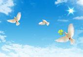 голуби — Стоковое фото
