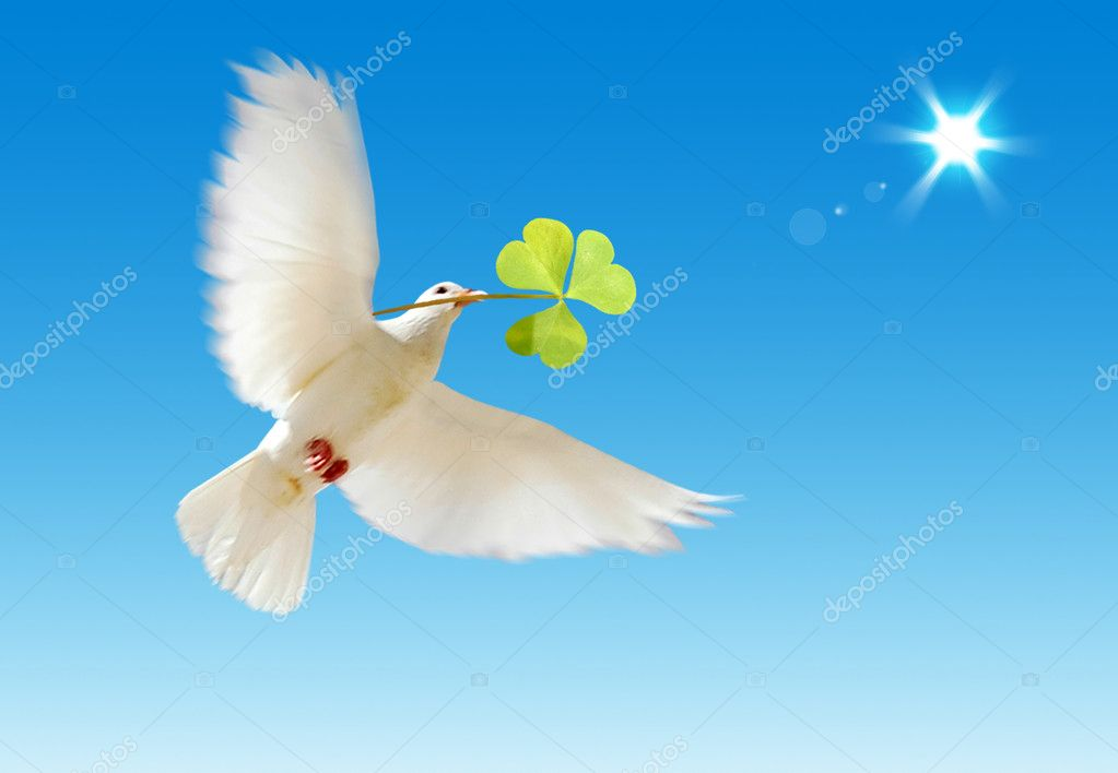 A free flying white dove with a green plant isolated on a blue sky background. — Stock Photo #1710092