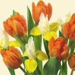 flor de primavera — Foto Stock