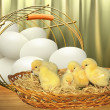 Stock Photo: Eggs and chickens