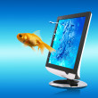 Golden Fish And Screen - Stock Photo