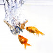 Golden Fishes And Keys — Stock Photo