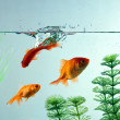 Royalty-Free Stock Photo: Fishes