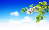 Sezon wiosenny — Zdjęcie stockowe