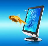 Altın balık ve ekran — Stok fotoğraf